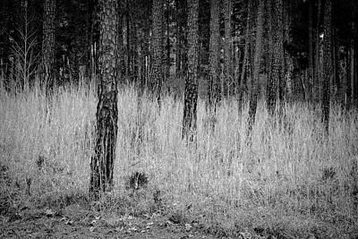 Photograph - Vertical Contrast by David Heilman