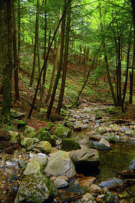 Photograph - Vertical Creek In Massachusetts by Raymond Salani III