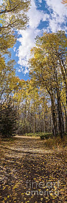 Landmarks Royalty Free Images - Vertical Panorama of Changing Aspens in the Fall - Twin Lakes San Isabel National Forest Colorado Royalty-Free Image by Silvio Ligutti
