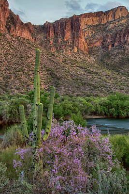 Photograph - Vertical Saguaro And Ironwood Blooms by Dave Dilli