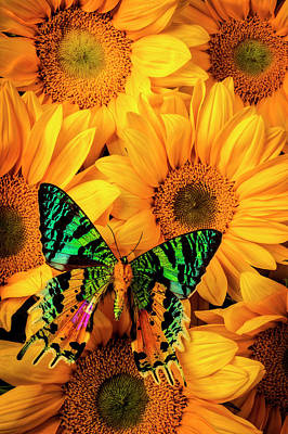 Photograph - Very Unique Butterfly by Garry Gay