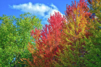 Art Print featuring the photograph Vibrant Autumn Hues At Cornell University - Ithaca, New York by Lynn Bauer