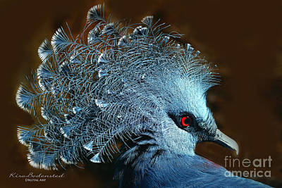 Photograph - Victoria Crowned Pigeon by Kira Bodensted