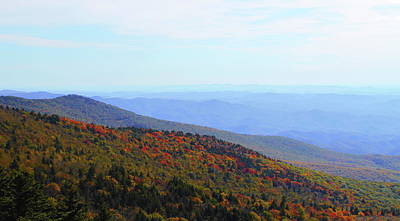 Cactus - View From Grandfather Mountain 6 by Cathy Lindsey