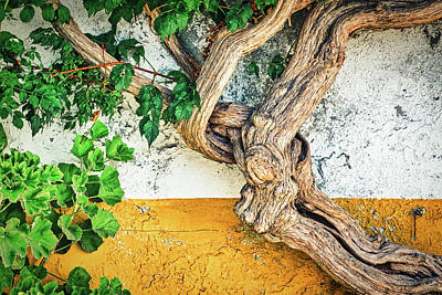 Photograph - Vine By A Weathered Wall - Portugal by Stuart Litoff