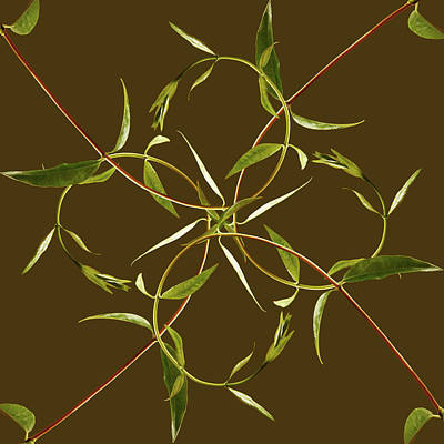 Photograph - Vines Forming Pattern by Paul Taylor