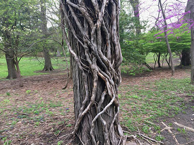 Photograph - Vines on tree by Wendy Erickson