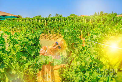 Photograph - Vineyard California Tourism by Benny Marty