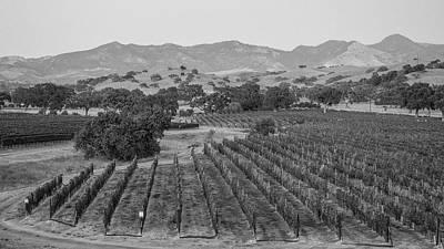 Photograph - Vineyard In California  by John McGraw