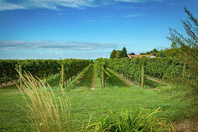 Photograph - Vineyard by Jack R Perry