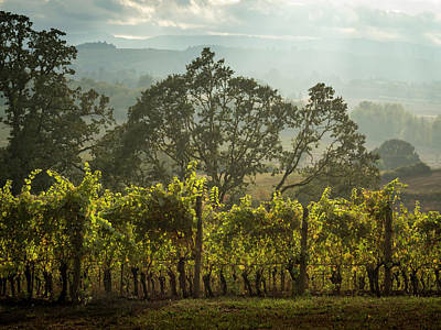 Photograph - Vineyard Sunset by Jean Noren