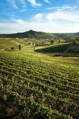 Photograph - Vineyards by Scacciamosche