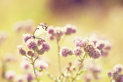 Insect Photograph - Vintage Butterfly On Pink Flowers by Jfairone