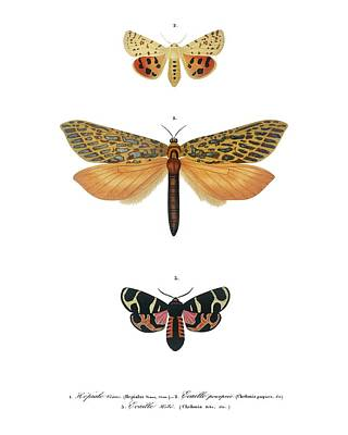 Painting - Vintage Illustration Of Collection Of Moths by Celestial Images