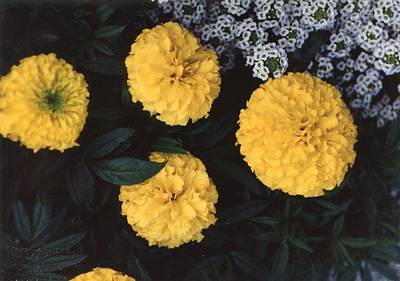 Painting - Vintage Photo Of Flowers And Garden 1970s - 1980s - 048 by Celestial Images