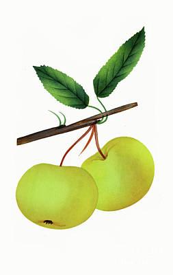 Nikki Vig Digital Art - Vintage Yellow Apple Fruit Art by Nikki Vig