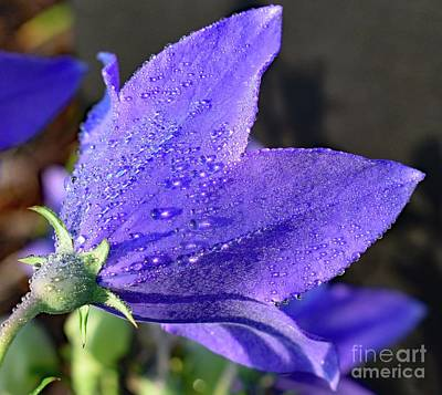 Michael Jackson - Violet Blue Balloon Flower by Cindy Treger