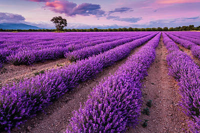 Royalty-Free and Rights-Managed Images - Violet Dreams by Evgeni Dinev