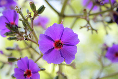 Photograph - Violet Flower by Eric Christopher Jackson