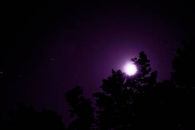 Photograph - Violet Night by Mike Smale