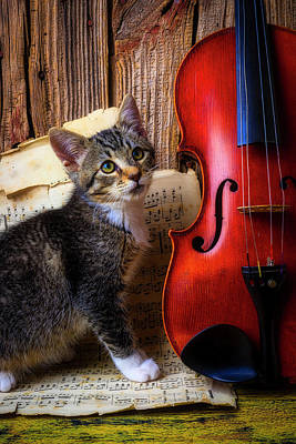 Photograph - Violin And Kitten by Garry Gay