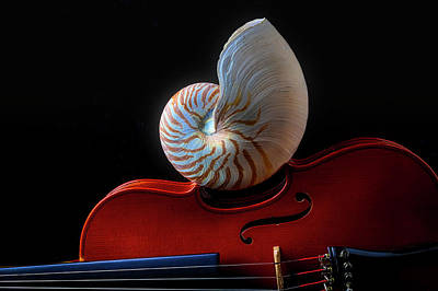 Photograph - Violin And Nautilus Shell by Garry Gay