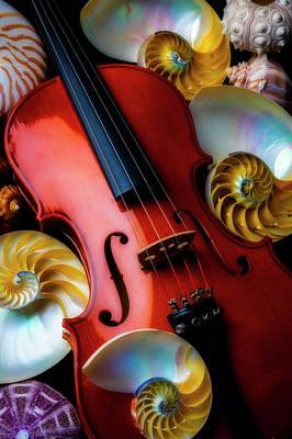 Photograph - Violin And Seashells by Garry Gay