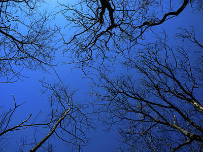 Photograph - Virginia Trees On A Blue Bird Day by Raymond Salani III