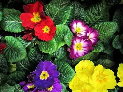 Photograph - Viva Spring by Rosita Larsson