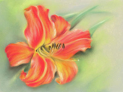 Pastel - Vivid Orange Daylily by MM Anderson