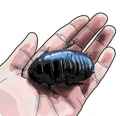 Child Wall Art - Digital Art - W Is For Wood Cockroach by Joan Stratton