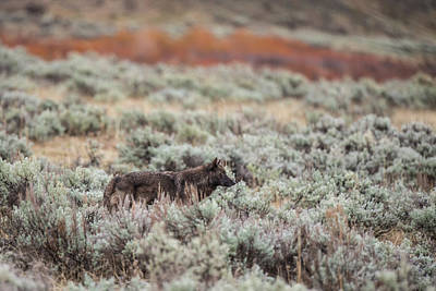 Photograph - W30 by Joshua Able's Wildlife