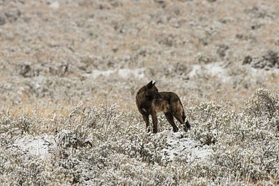 Photograph - W49 by Joshua Able's Wildlife