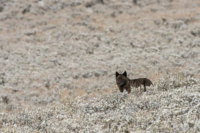 Photograph - W50 by Joshua Able's Wildlife