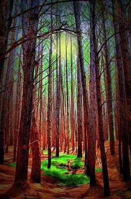 Photograph - Waihou Forest  - Maui by DJ Florek
