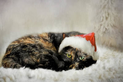 Photograph - Waiting For Catnip From Santa by Jai Johnson