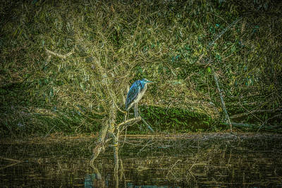Animals Royalty-Free and Rights-Managed Images - Waiting #i0 by Leif Sohlman