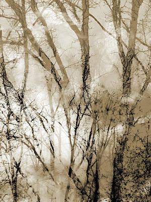 Photograph - Waldnebel by Jorg Becker