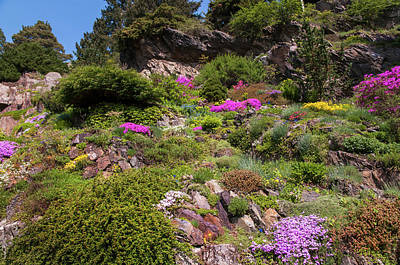 Photograph - Walk In Spring Eden. Alpine Garden 1 by Jenny Rainbow