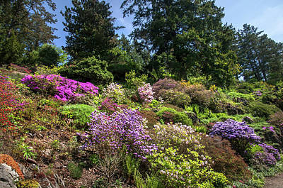 Photograph - Walk In Spring Eden. Alpine Garden 4 by Jenny Rainbow