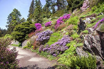 Photograph - Walk In Spring Eden. Blooming Alpine Garden by Jenny Rainbow
