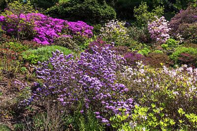 Photograph - Walk In Spring Eden. Blooming Azaleas by Jenny Rainbow