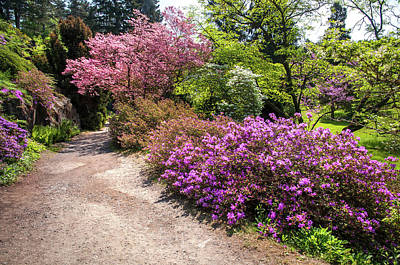 Photograph - Walk In Spring Eden. Colorful Path 3 by Jenny Rainbow