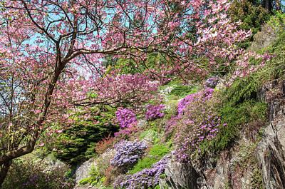 Photograph - Walk In Spring Eden. Dogwood Tree Blossom 1 by Jenny Rainbow