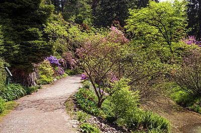 Photograph - Walk In Spring Eden. Fresh Greenery by Jenny Rainbow