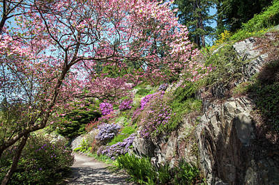 Photograph - Walk In Spring Eden. Heavenly Blooms 1 by Jenny Rainbow