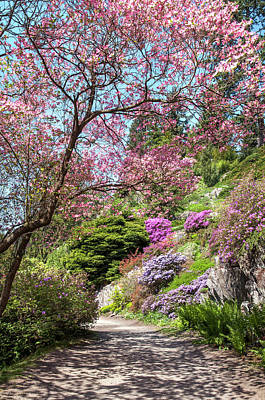 Photograph - Walk In Spring Eden. Heavenly Blooms 2 by Jenny Rainbow