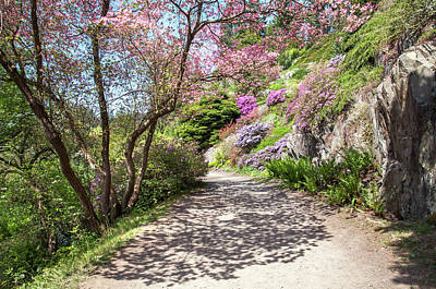 Photograph - Walk In Spring Eden. Heavenly Blooms 3 by Jenny Rainbow