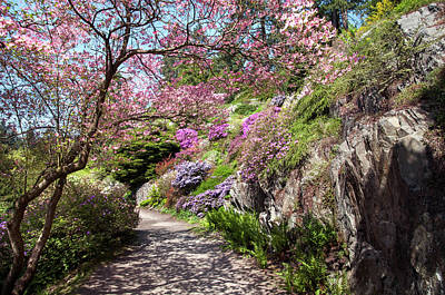 Photograph - Walk In Spring Eden. Heavenly Blooms by Jenny Rainbow