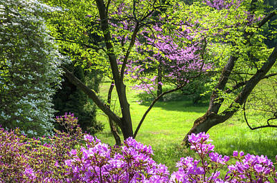 Photograph - Walk In Spring Eden. Magenta And Greens by Jenny Rainbow